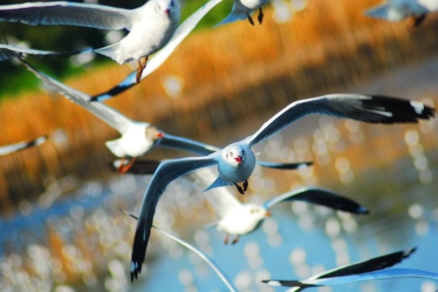 Картинки на день мигрирующих птиц014