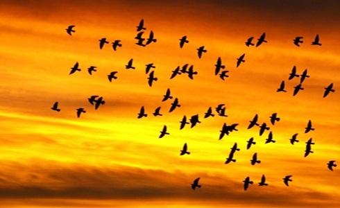 Картинки на день мигрирующих птиц016