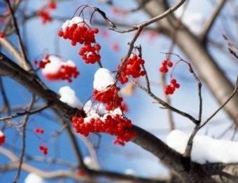 Картинки на праздник Сергей Зимний011