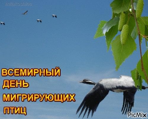 Красивые картинки на Всемирный день мигрирующих птиц001