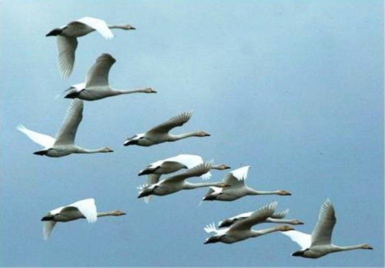Красивые картинки на Всемирный день мигрирующих птиц002