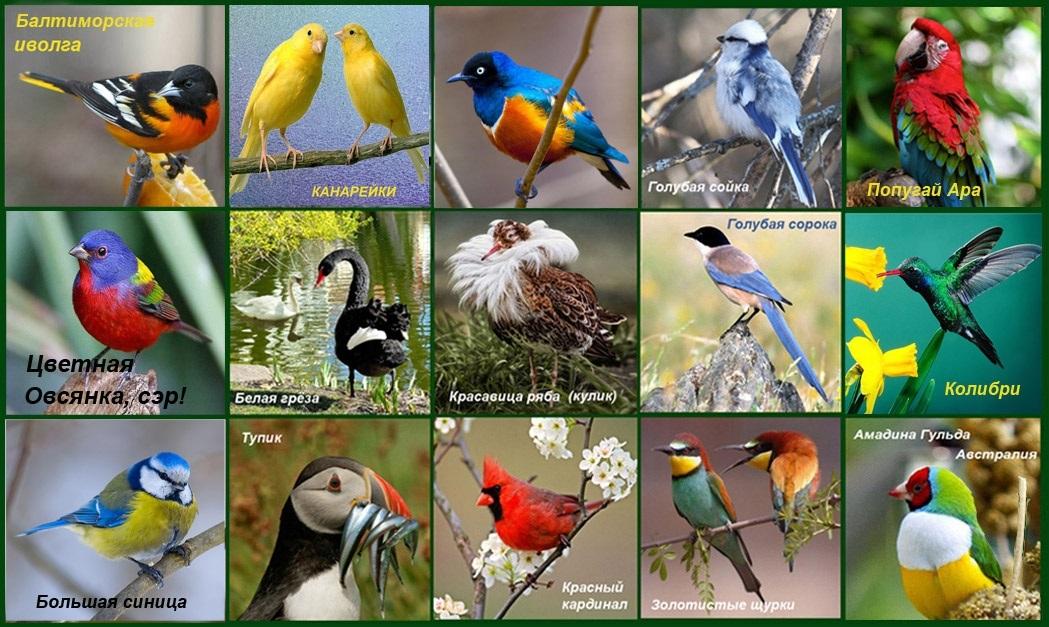 Красивые картинки на Всемирный день мигрирующих птиц003