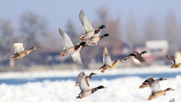 Красивые картинки на Всемирный день мигрирующих птиц004