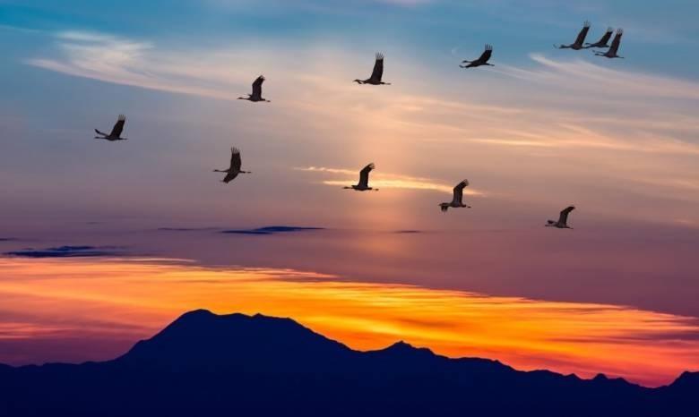 Красивые картинки на Всемирный день мигрирующих птиц005