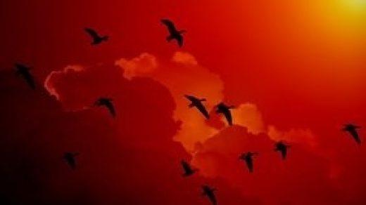 Красивые картинки на Всемирный день мигрирующих птиц006