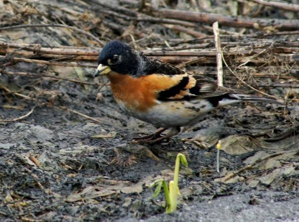 Красивые картинки на Всемирный день мигрирующих птиц007