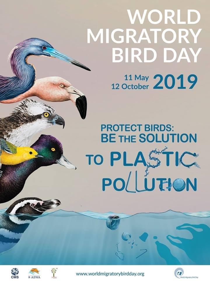 Красивые картинки на Всемирный день мигрирующих птиц008