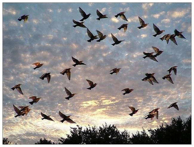 Красивые картинки на Всемирный день мигрирующих птиц009