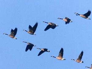 Красивые картинки на Всемирный день мигрирующих птиц010