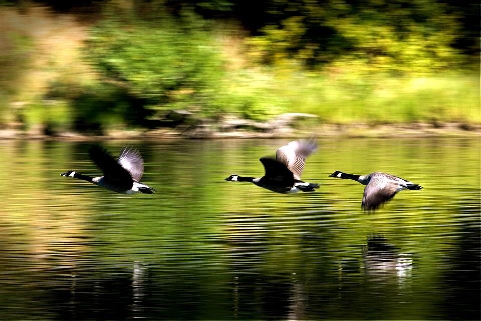 Красивые картинки на Всемирный день мигрирующих птиц011
