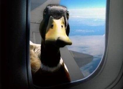 Красивые картинки на Всемирный день мигрирующих птиц012