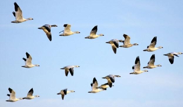 Красивые картинки на Всемирный день мигрирующих птиц014