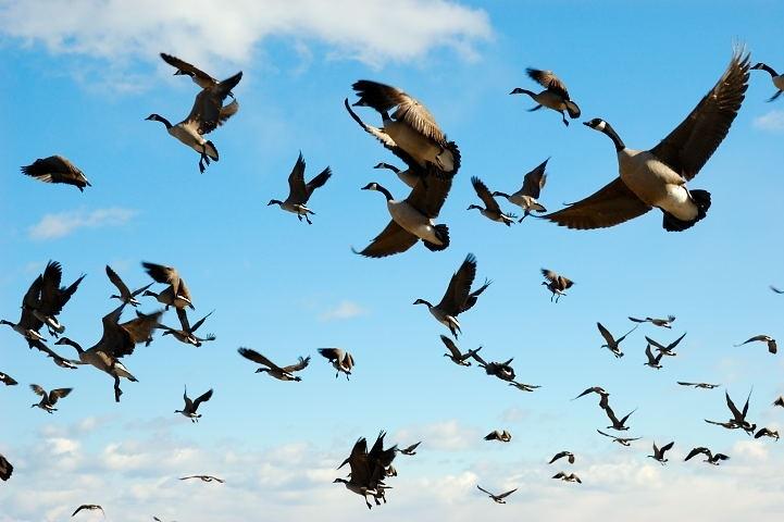 Красивые картинки на Всемирный день мигрирующих птиц015