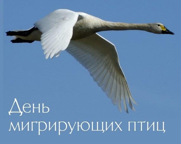 Красивые картинки на Всемирный день мигрирующих птиц016