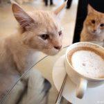 Красивые картинки на День кофе в Вене