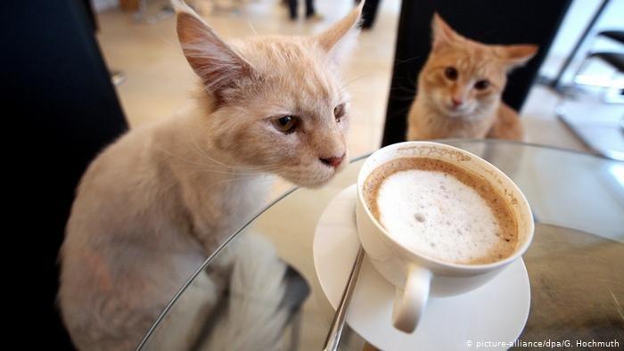 Красивые картинки на День кофе в Вене010