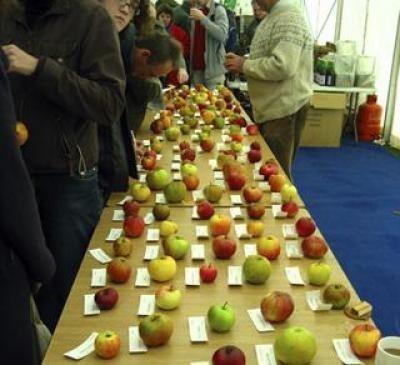 Красивые картинки на День яблока в Англии003