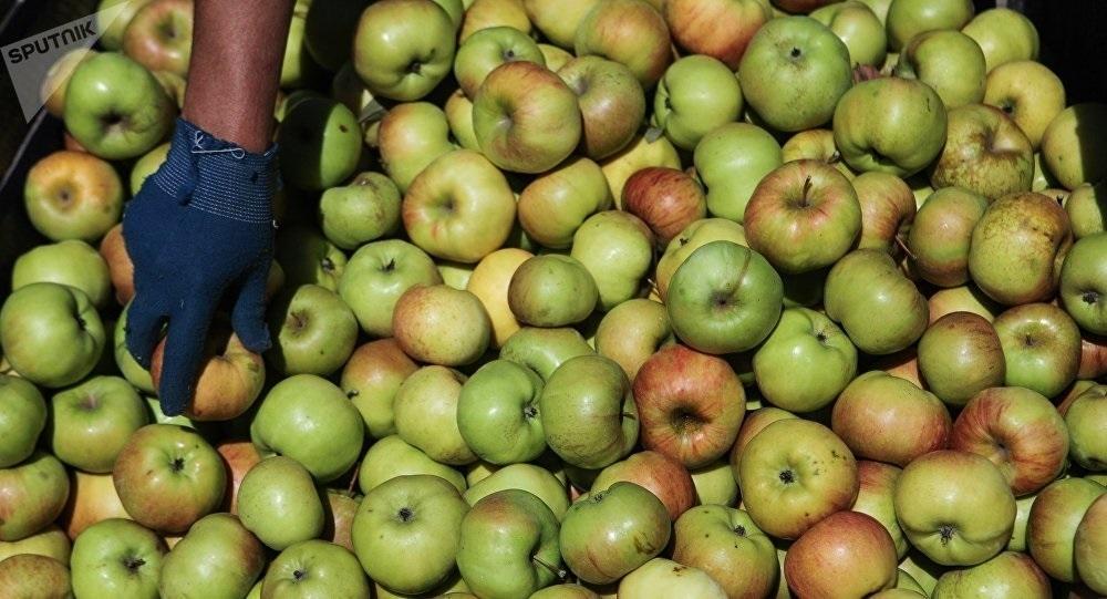 Красивые картинки на День яблока в Англии004