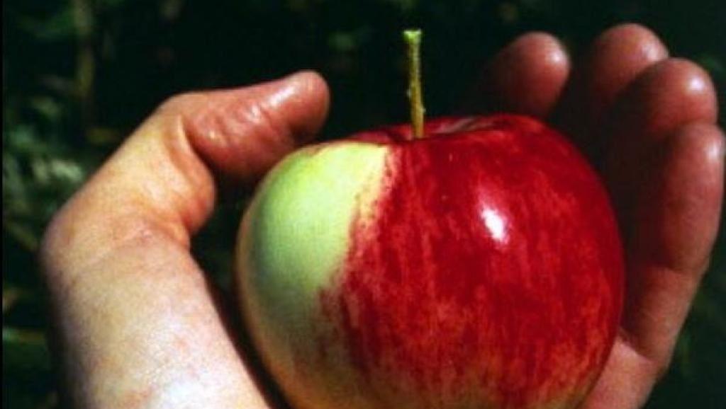 Красивые картинки на День яблока в Англии005