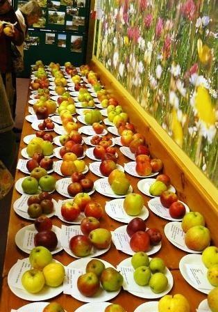 Красивые картинки на День яблока в Англии013