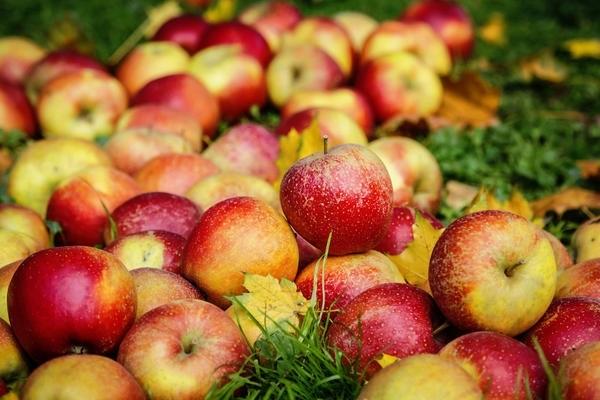 Красивые картинки на День яблока в Англии014
