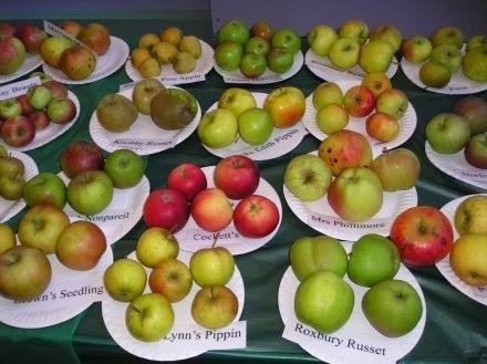 Красивые картинки на День яблока в Англии015