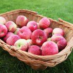 Красивые картинки на День яблока в Англии