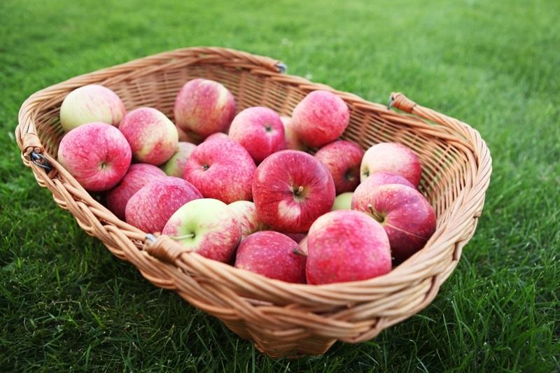 Красивые картинки на День яблока в Англии020