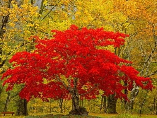 Красивые картинки осени октябрь для детей004