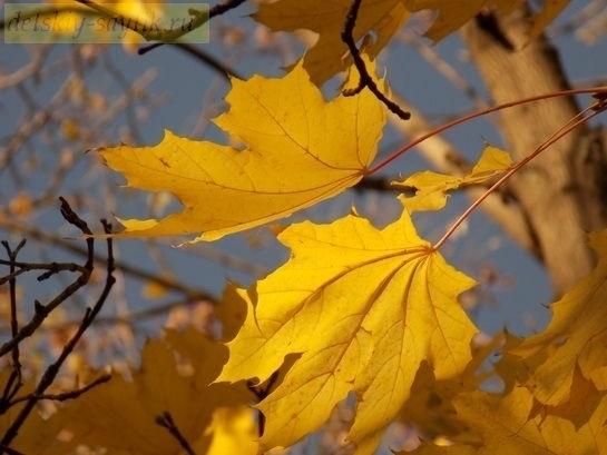 Красивые картинки осени октябрь для детей011