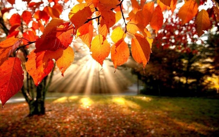 Красивые картинки осени октябрь для детей021