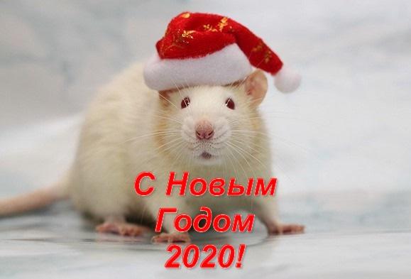 Красивые открытки с Новым годом 2020 (15)