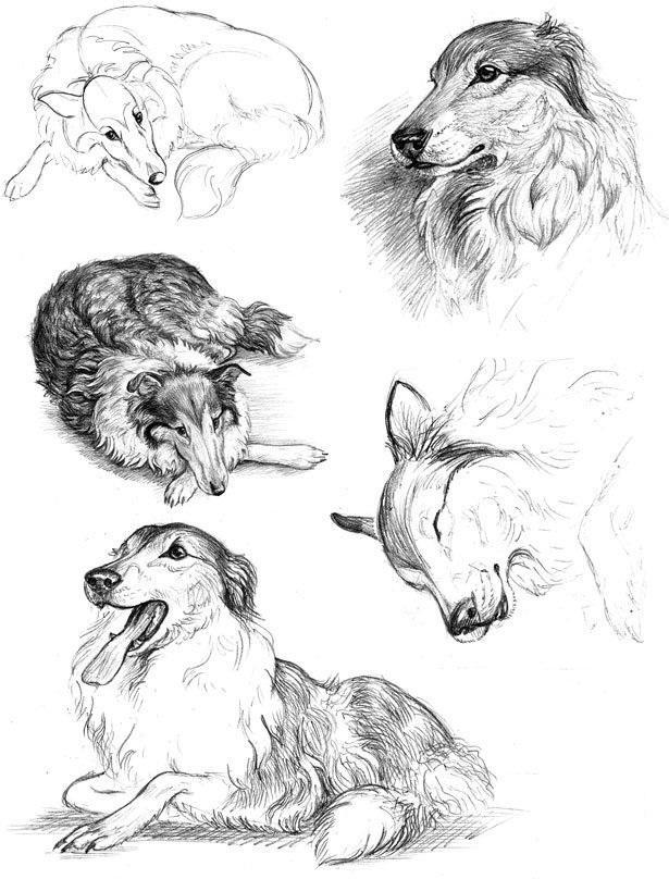 Наброски и зарисовки животных и птиц001