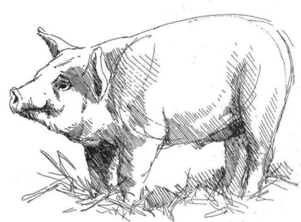 Наброски и зарисовки животных и птиц002