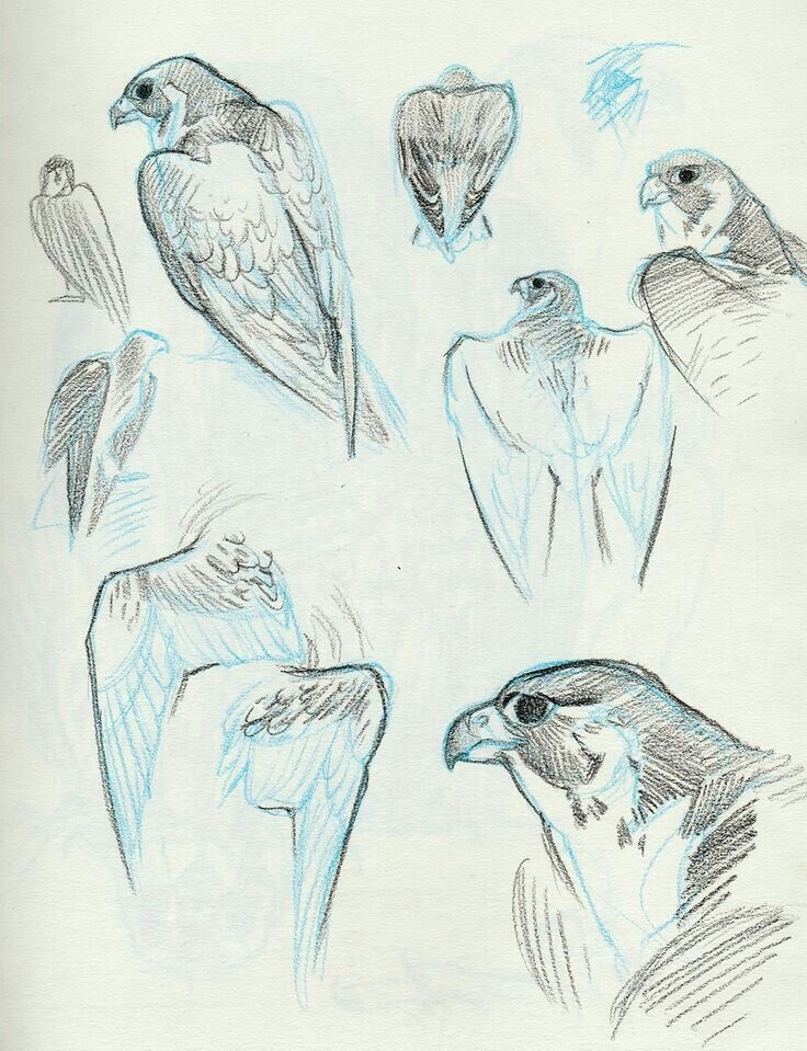 Наброски и зарисовки животных и птиц003