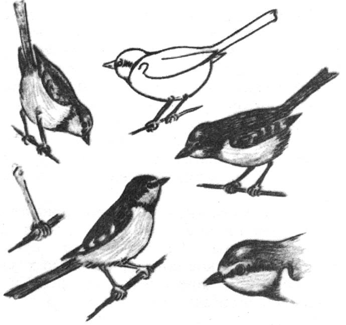 Наброски и зарисовки животных и птиц004
