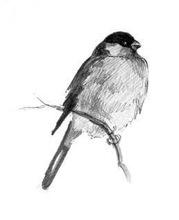 Наброски и зарисовки животных и птиц005