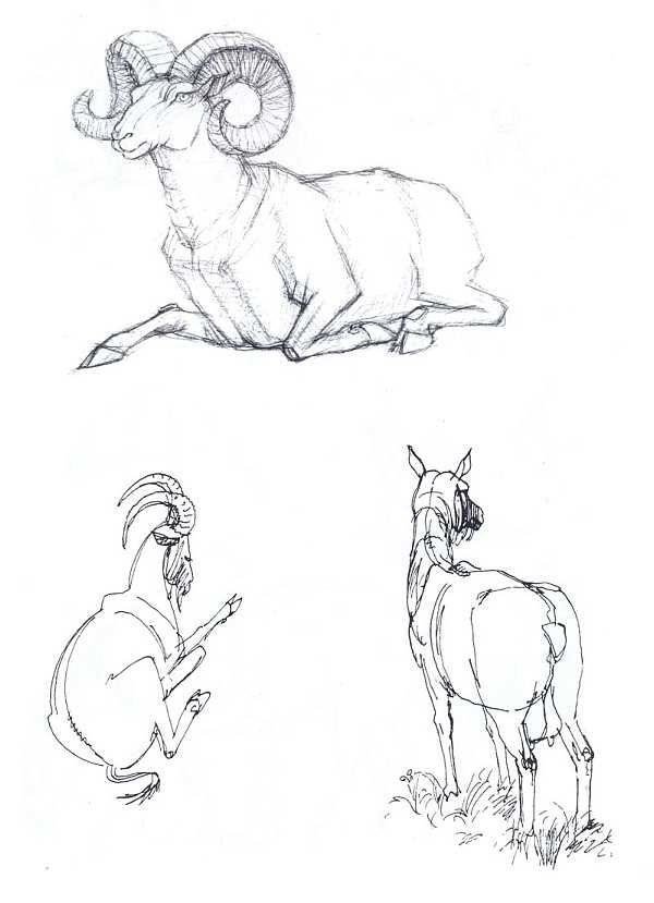 Наброски и зарисовки животных и птиц006
