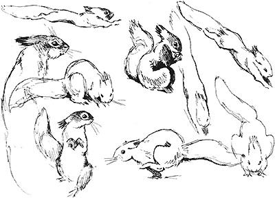 Наброски и зарисовки животных и птиц007