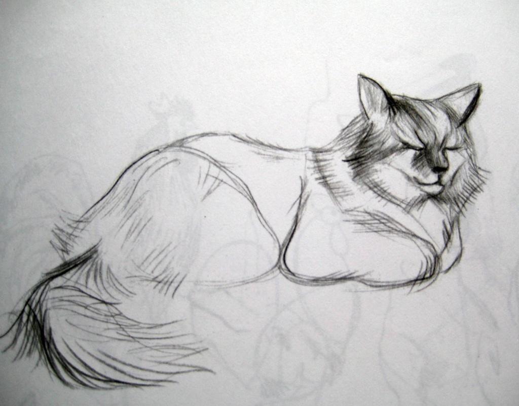 Наброски и зарисовки животных и птиц009