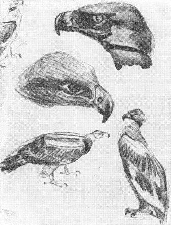 Наброски и зарисовки животных и птиц010