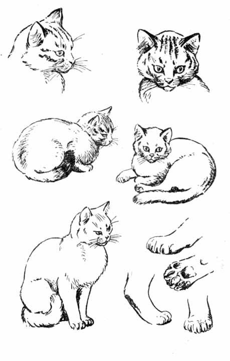 Наброски и зарисовки животных и птиц011