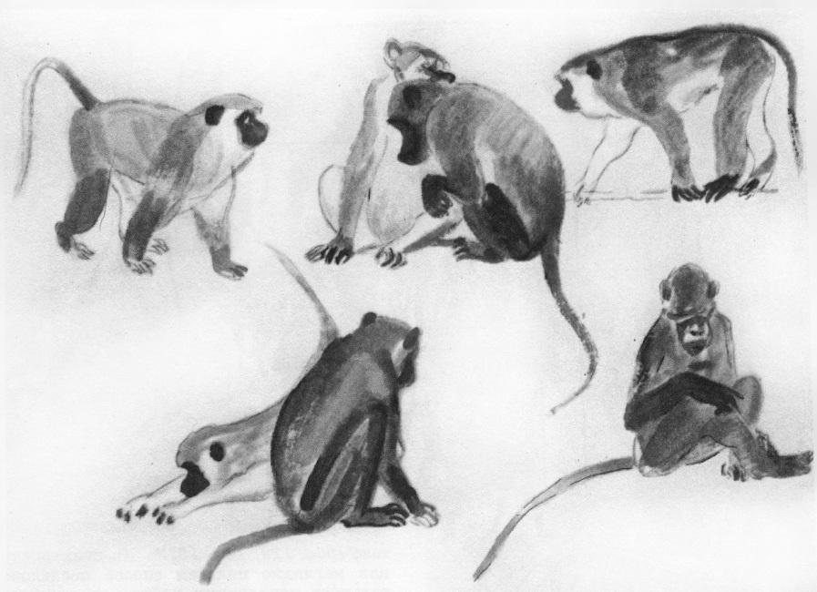 Наброски и зарисовки животных и птиц014