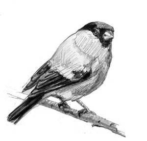 Наброски и зарисовки животных и птиц016