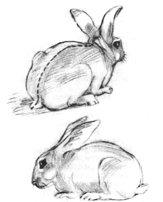 Наброски и зарисовки животных и птиц017