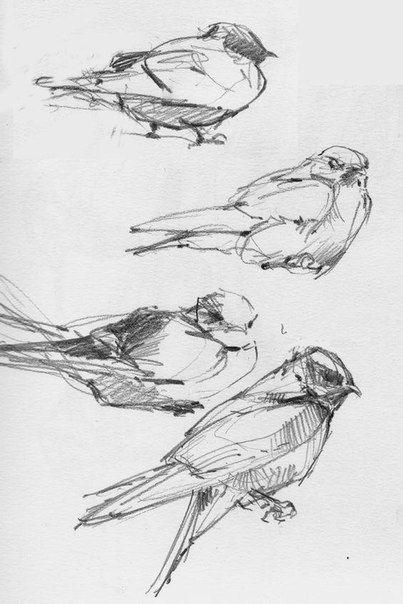 Наброски и зарисовки животных и птиц018