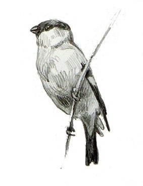 Наброски и зарисовки животных и птиц019