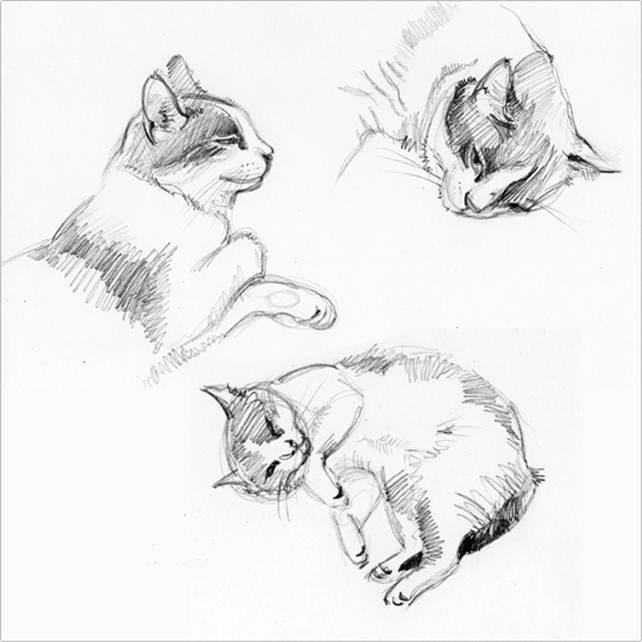 Наброски и зарисовки животных и птиц020