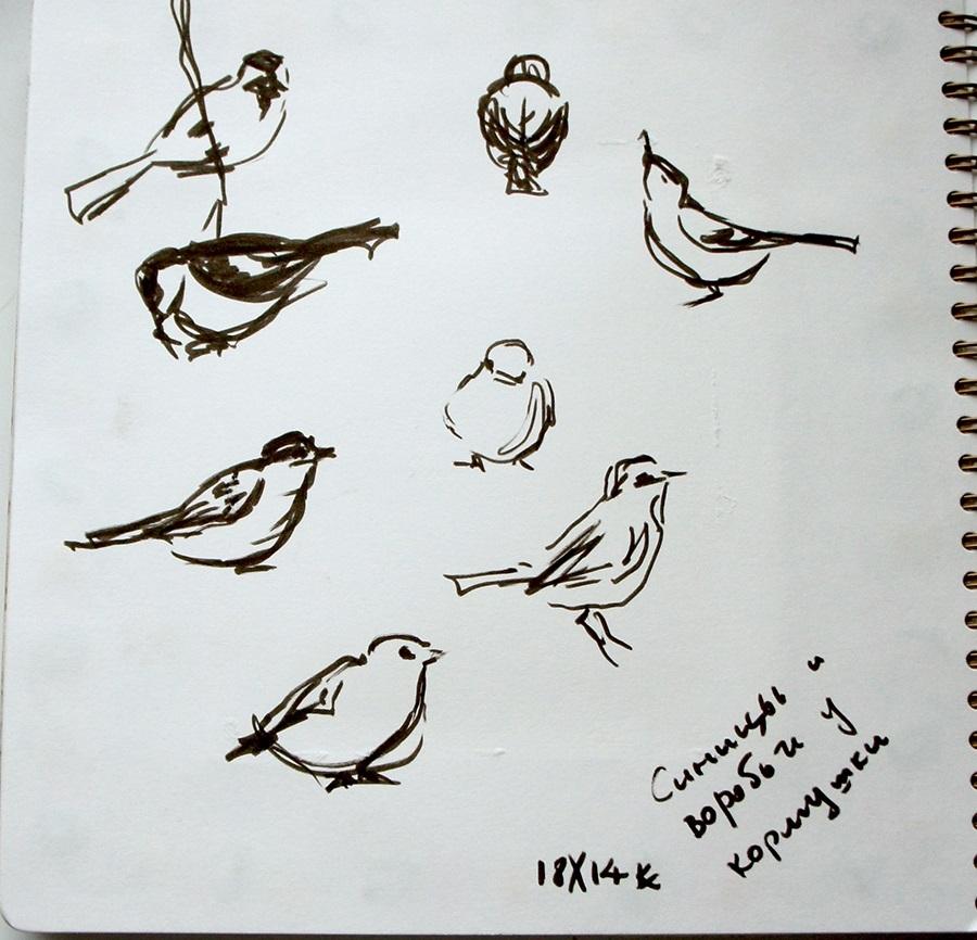 Наброски и зарисовки животных и птиц022