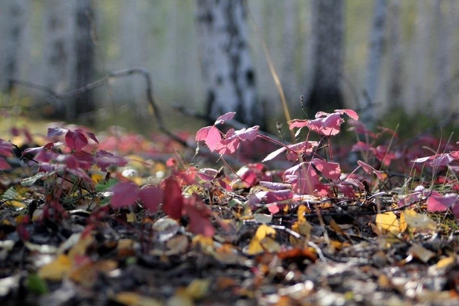 Октябрь картинки на утро для любимых011